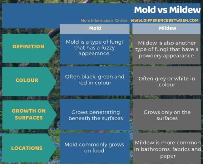 Difference Between Mold and Mildew in Tabular Form