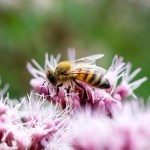 Difference Between Pollination and Fertilization