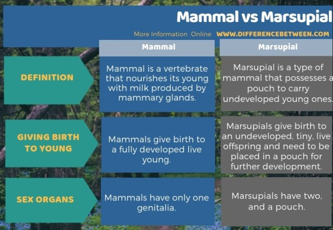 Difference Between Mammal and Marsupial in Tabular Form