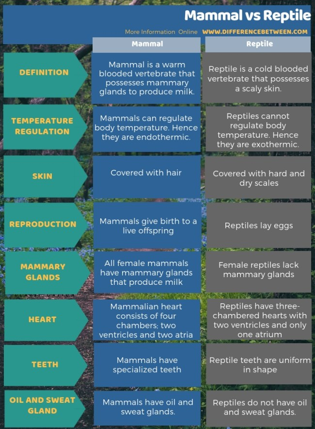 Difference Between Mammal and Reptile in Tabular Form