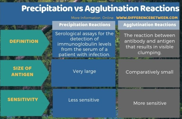 Difference Between Precipitation and Agglutination Reactions in Tabular Form