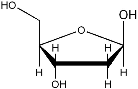Key Difference - a Ribonucleotide vs a Deoxyribonucleotide