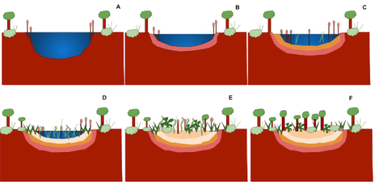 Key Difference Between Eutrophication and Succession