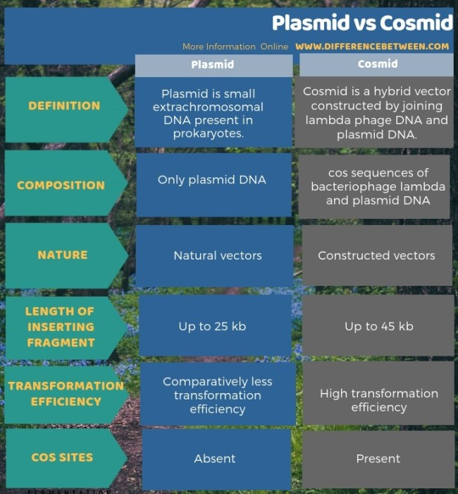Difference Between Plasmid and Cosmid in Tabular Form