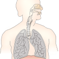 Difference Between Breathing and Respiration