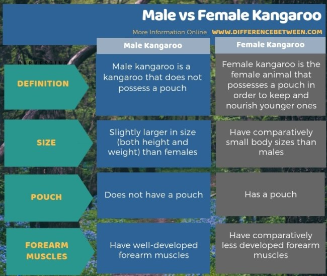 Difference Between Male and Female Kangaroo in Tabular Form
