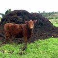 Difference Between Manure and Organic Matter