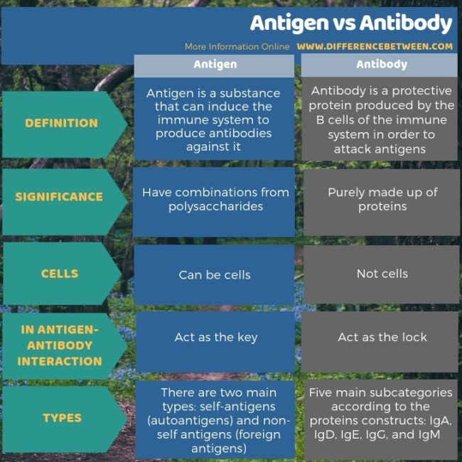 Difference Between Antigen and Antibody in Tabular Form