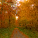 Difference Between Deciduous and Coniferous Trees