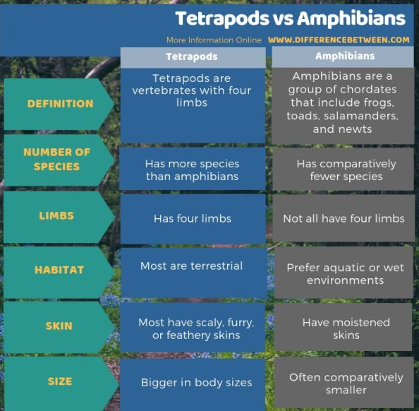 Difference Between Tetrapods and Amphibians- Tabular Form