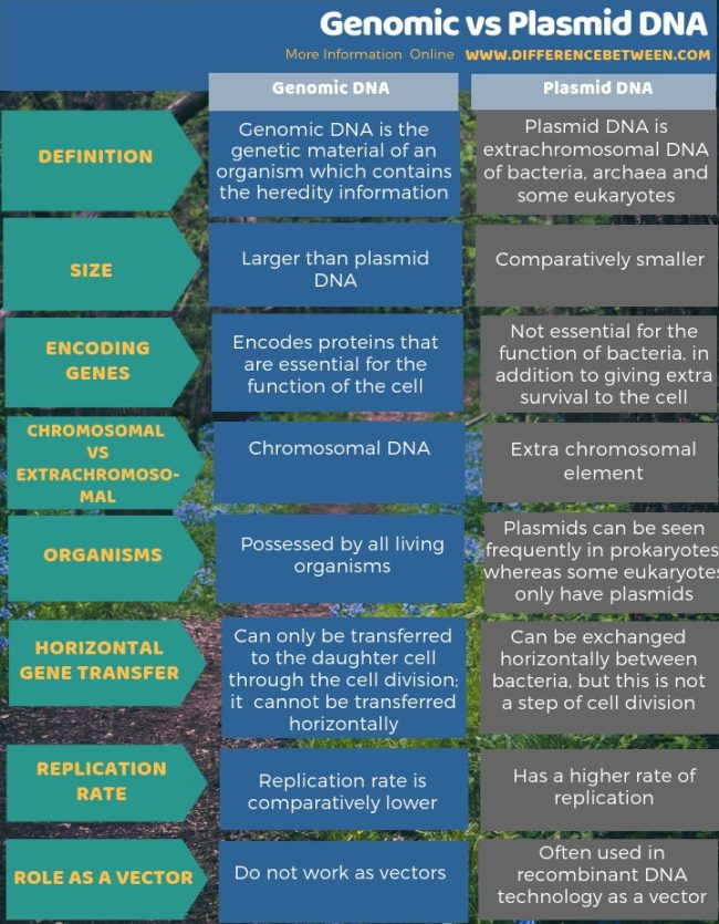 Difference Between Genomic and Plasmid DNA in Tabular Form