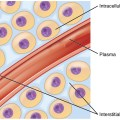 Difference Between Intracellular and Extracellular Fluids