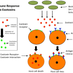 Difference Between Endotoxin and Exotoxin