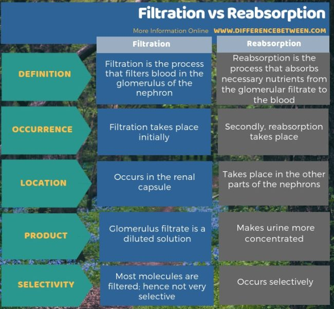 Difference Between Filtration and Reabsorption in Tabular Form
