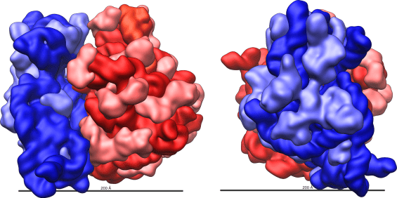 Difference Between rRNA and Ribosomes