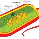 Difference Between Prokaryotic and Eukaryotic Genome