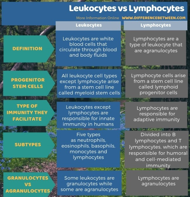 Difference Between Leukocytes and Lymphocytes in Tabular Form