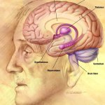 Difference Between Working Memory and Short Term Memory