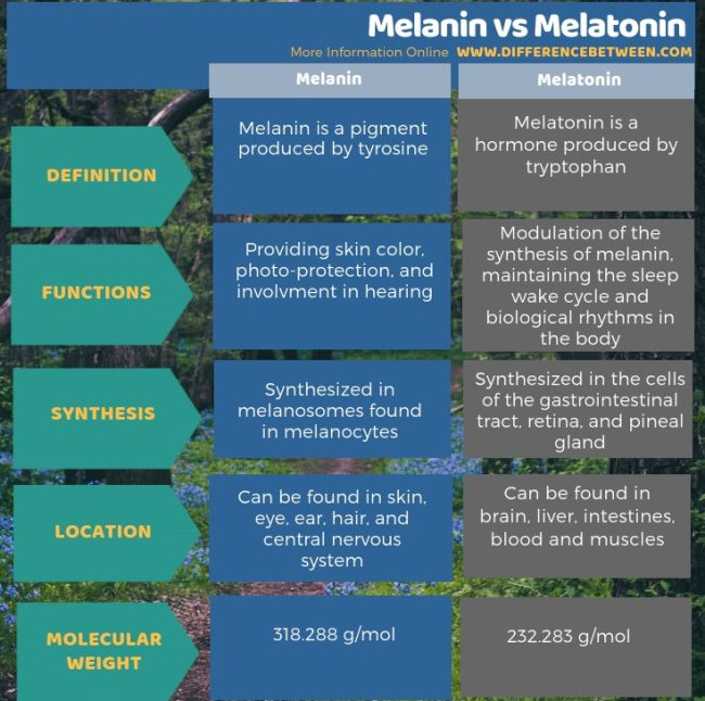 Difference Between Melanin and Melatonin in Tabular Form
