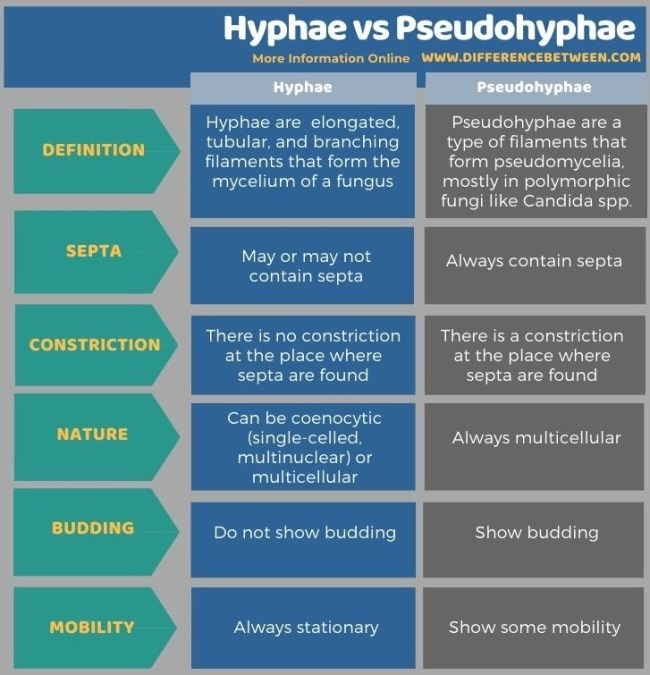 Difference Between Hyphae and Pseudohyphae - Tabular Form