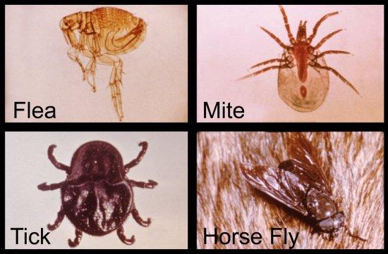 Key Difference - Mollusks vs Arthropods
