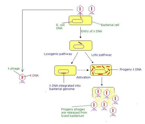 Key Difference - Generalized vs Specialized Transduction