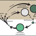 Difference Between Vegetative Propagation and Spore Formation