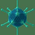 Difference Between Adenovirus and Retrovirus
