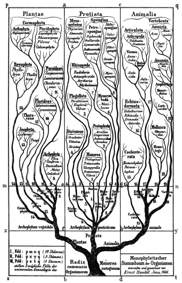 Key Difference Between Ontogeny and Phylogeny