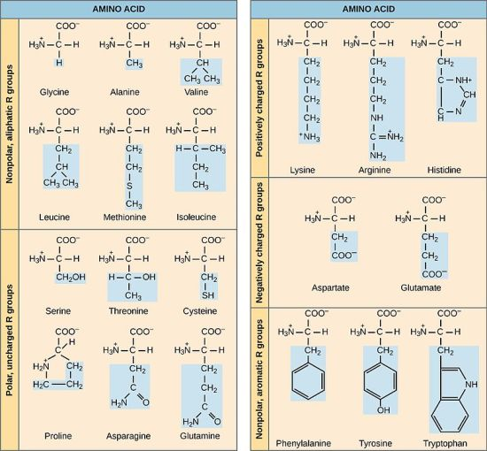 Difference Between Polar and Nonpolar Amino Acids