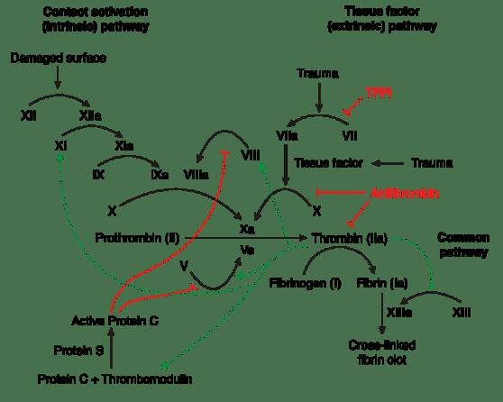 Difference Between Von Willebrand Disease and Hemophilia