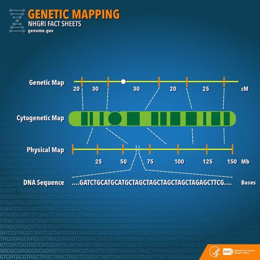 Difference Between Genetic Map and Physical Map
