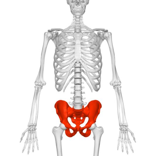 Key Difference - Male vs Female Bones
