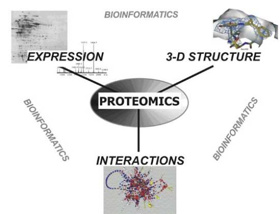 Difference Between Targeted and Untargeted Proteomics