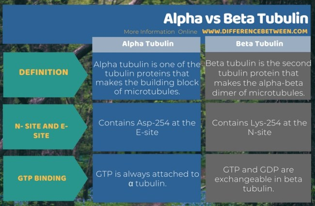 Difference Between Alpha and Beta Tubulin in Tabular Form