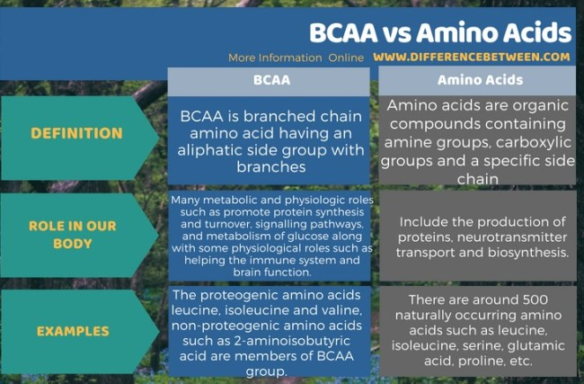 Difference Between BCAA and Amino Acids in Tabular Form