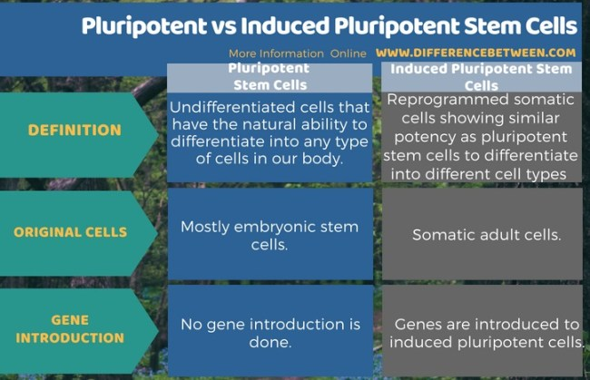 Difference Between Pluripotent and Induced Pluripotent Stem Cells in Tabular Form
