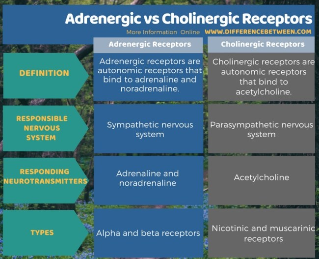 Difference Between Adrenergic and Cholinergic Receptors in Tabular Form