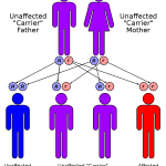 Difference Between Genetic Testing and Screening