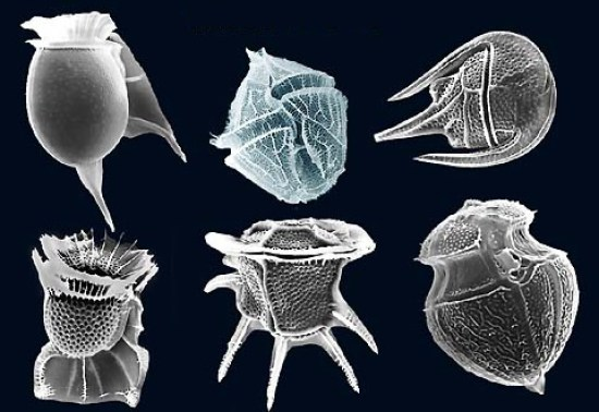 Difference Between Diatoms and Dinoflagellates_Fig 02