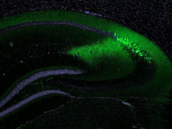 Key Difference Between GFP and EGFP