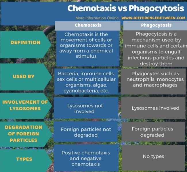 Difference Between Chemotaxis and Phagocytosis - Tabular Form