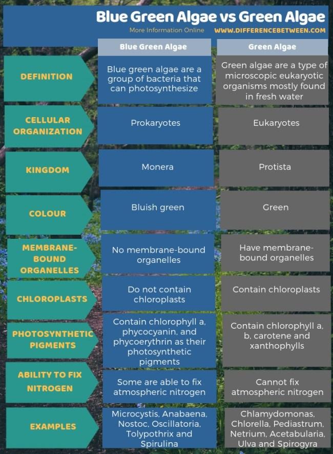 Difference Between Blue Green Algae and Green Algae -Tabular Form