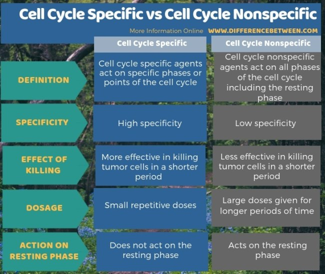 Difference Between Cell Cycle Specific and Cell Cycle Nonspecific - Tabular Form