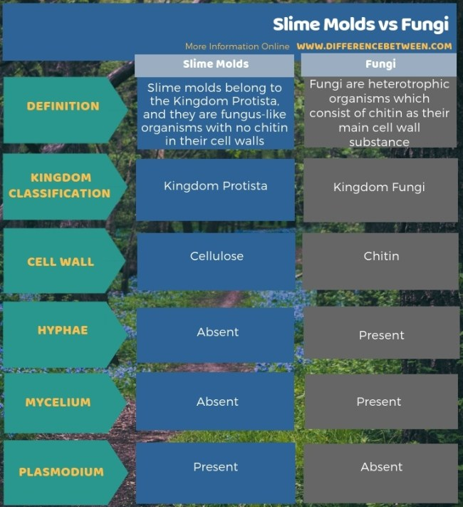 Difference Between Slime Molds and Fungi - Tabular Form