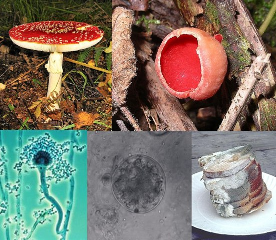 Difference Between Slime Molds and Fungi