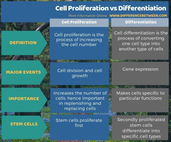 Difference Between Cell Proliferation and Differentiation in Tabular Form