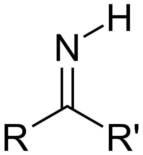 Key Difference - Amino Acid vs Imino Acid