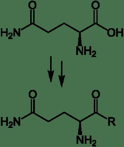 Key Difference - BCAA vs Glutamine