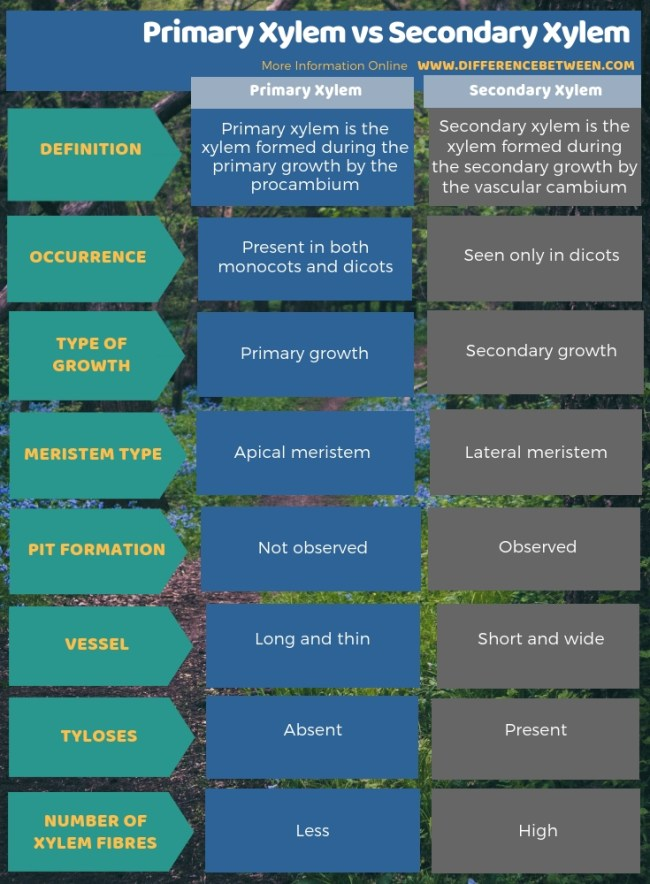 Difference Between Primary Xylem and Secondary Xylem in Tabular Form